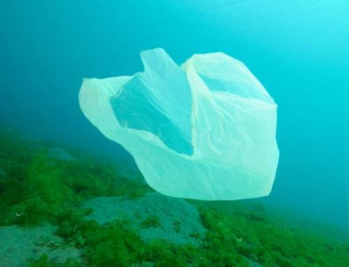 Dramatic Rise in Plastic Seabed Litter Around UK